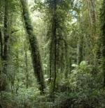 غابات في نيوساوث ويلز