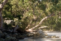 Bay jervis bay trees