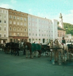 Horses await tourists in SAlzburg
