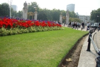 gardens around buckingham palace
