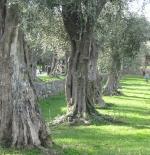 حديقة في مدينة نيس