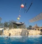 الدلفين في شرم الشيخ