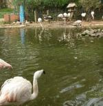 Agadir Zoo