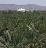 مزارع ( بلدان ) منطقة قباء