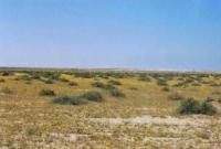 صحراء مدينة الخبر