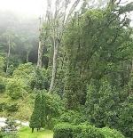 حديقة الملوك في شنغماي