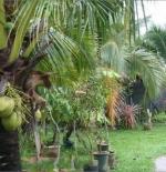 حديقة نباتات الطحالب والأوركيد