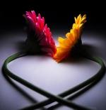 صورة قلب بالورود