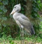 صورة طائر كبير الحجم