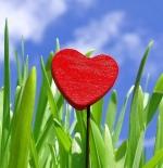 صورة قلب بين أحضان الطبيعة