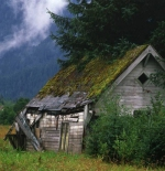 صورة لمنزل في الغابة