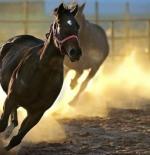 صورة الخيول
