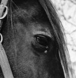 صورة حصان حزين