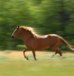 صورة حصان يجري