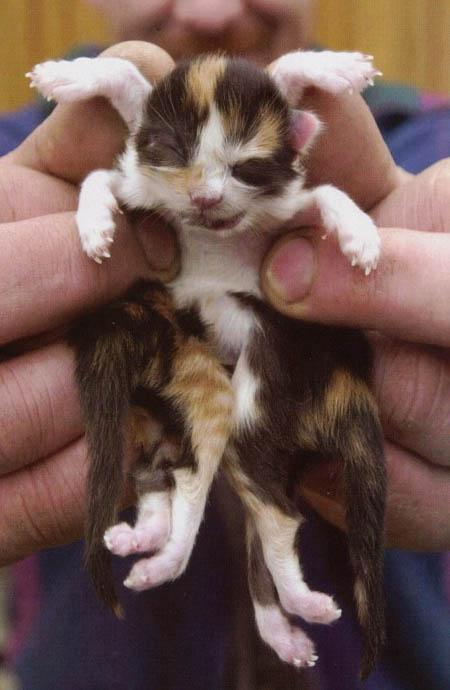 صورة قطة بثمانية أرجل من قسم صور