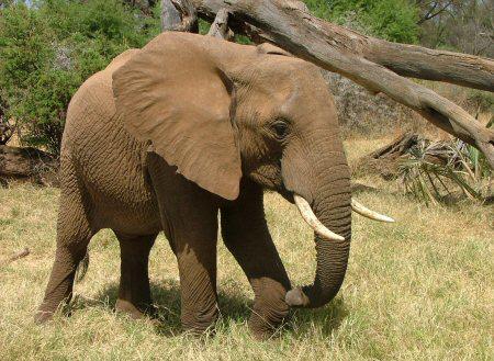 قصة الفيل نيلسون (تستحق القراءه) 27042006-113755-1