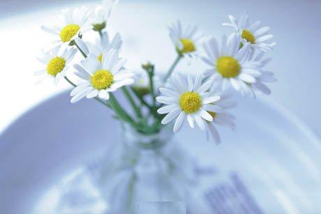 صورة أزهار بيضاء