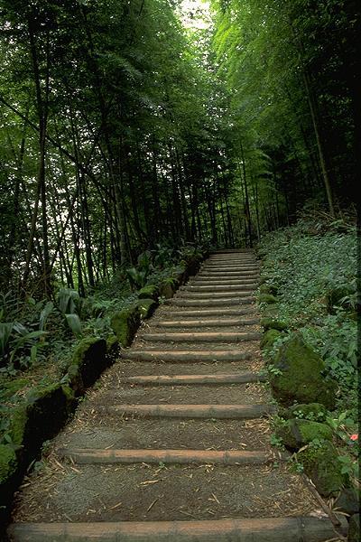 صورة طريق في الغابة