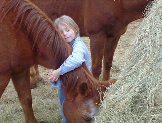 صورة حصان لطيف